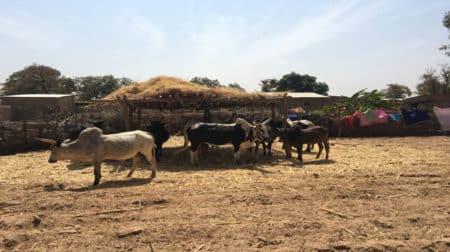 Enclos de bétail