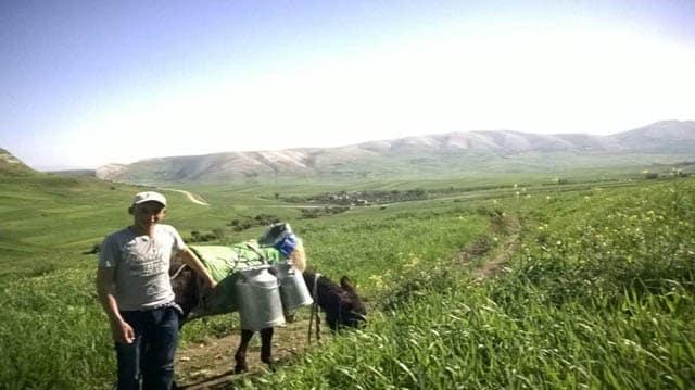Eleveur de vâche à lait dans le nord de Tunisie